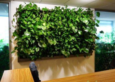 żywy-obraz-zielona-ściana-768x719