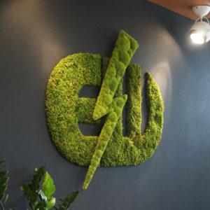 logo z mchu